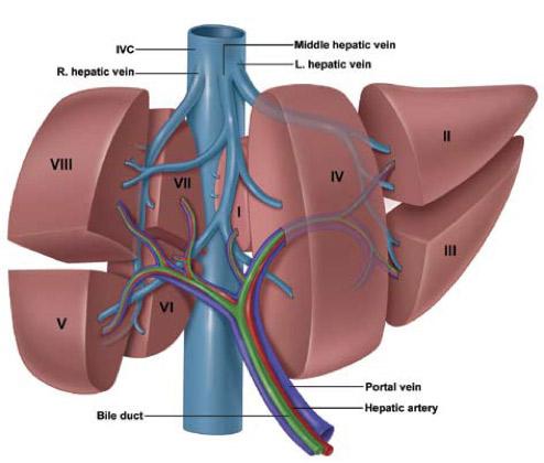 Cancer Fígado